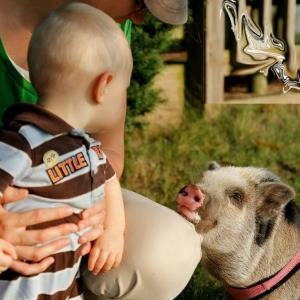 GEE Funny Farm - Animal For A Party - Mukwonago, WI