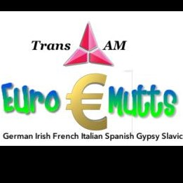 Charleston Irish Band | Trans Am Euro Mutts