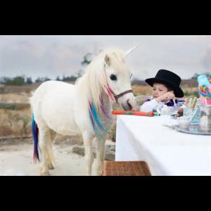 Pony Parties - Pony Rides - Mullica Hill, NJ