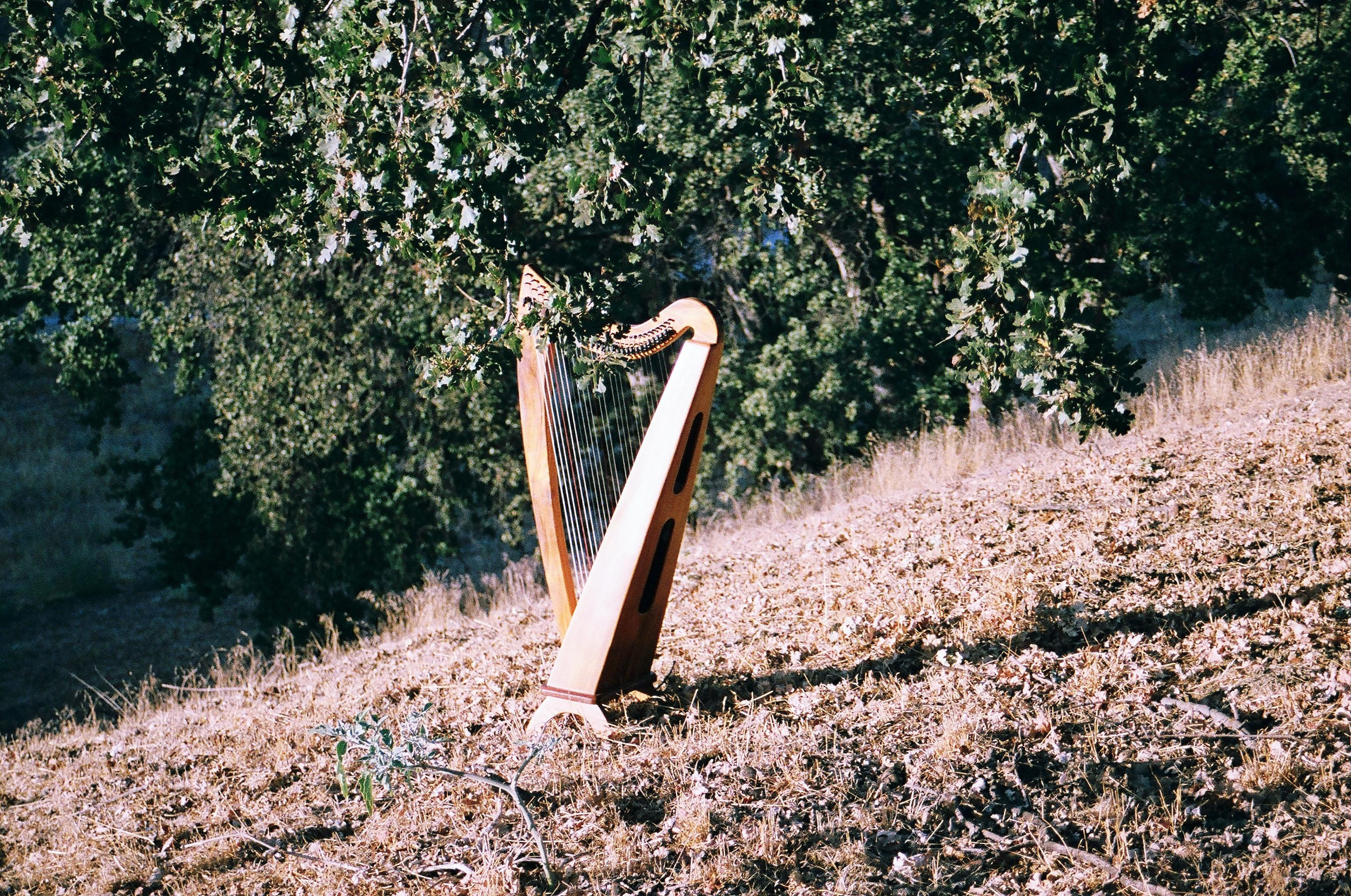 Hollienea, Harpist Los Angeles