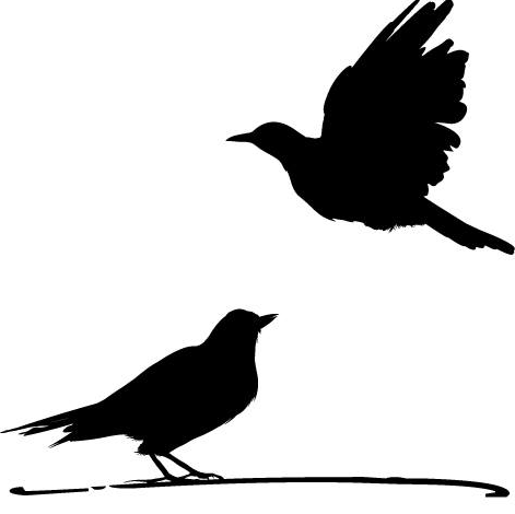 Two Birds Events - Event Planner - Seattle, WA