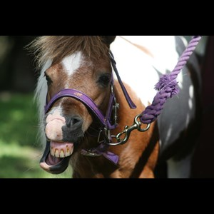 Highland City Animal For A Party | KM Pony Parties