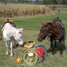 Fly Creek Animal For A Party | Aly's Ponies & Traveling Barnyard