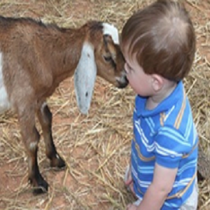 Little Vine Petting Zoo - Animal For A Party - Atlanta, GA