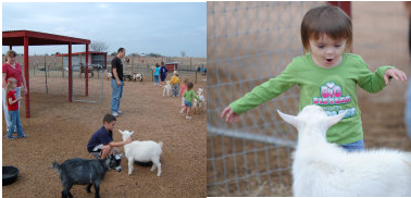 The Gentle Zoo - Petting Zoo - Dallas, TX