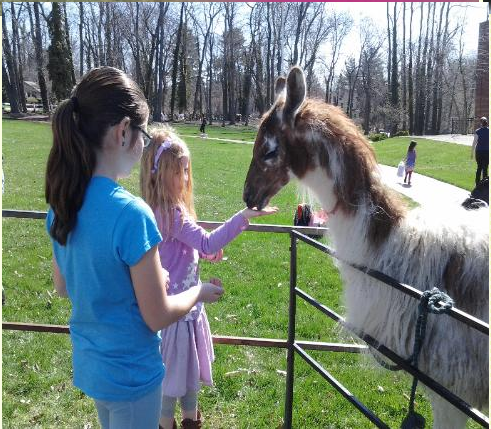Cloverland Entertainment - Petting Zoo - Frenchtown, NJ