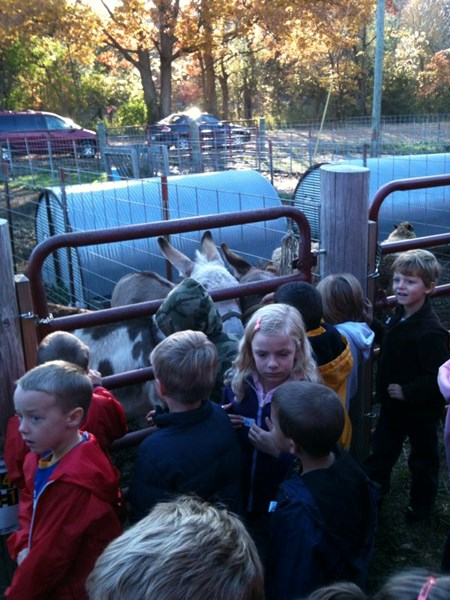 Mary's Country Critters - Petting Zoo - Wayland, MI