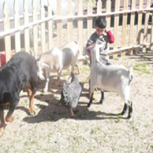 My Petting Zoo - Animal For A Party - Mesa, AZ