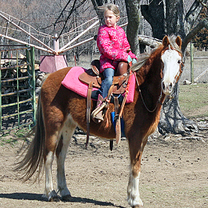 Perfect Pony Rides - Animal For A Party - Oklahoma City, OK