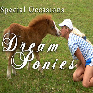 Special Occasions Dream Ponies - Animal For A Party - Oklahoma City, OK