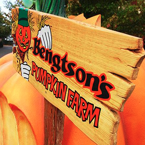 Bengtson's Pumpkin Farm - Animal For A Party - Portland, OR
