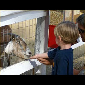 Frederick Petting Zoo | Big D's Pony Rides LLC