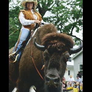 Linville Falls Animal For A Party | BUFFALO * LONGHORN *MINI's*UNICORN photos/parades