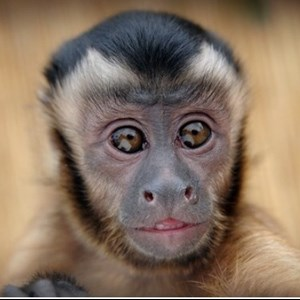 Sacramento Petting Zoo | Wild About Monkeys!