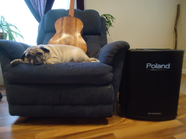 My Pug Dinky, 7 years old now.