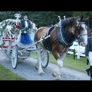 Virginia Beach Wedding Limo | Smithfield Horse & Carriage, Ltd.