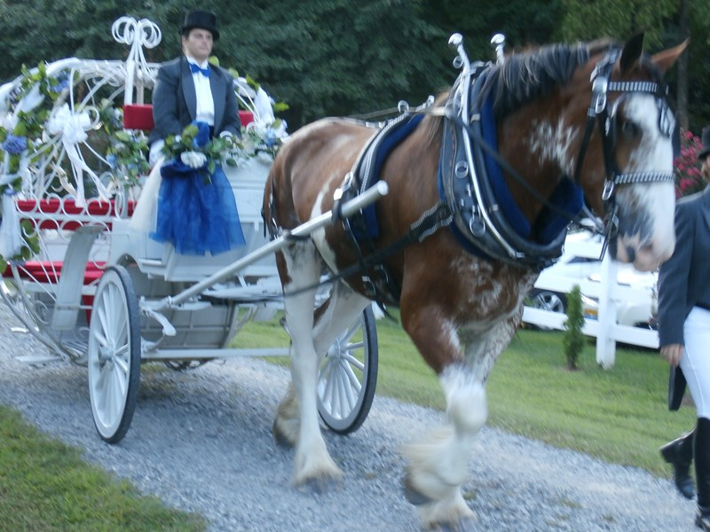 Smithfield Horse & Carriage, Ltd. - Convertible Rental - Virginia Beach, VA
