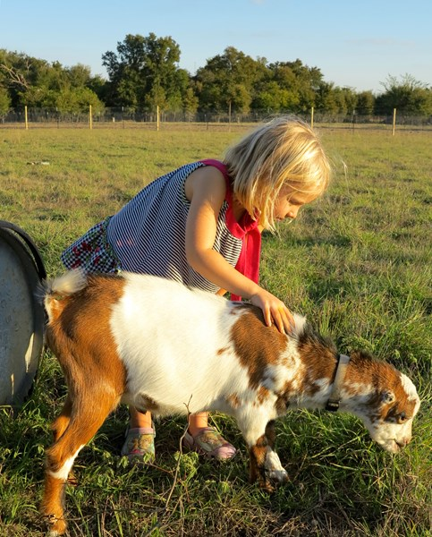 Dalton Family Farm and Petting Zoo - Petting Zoo - Austin, TX