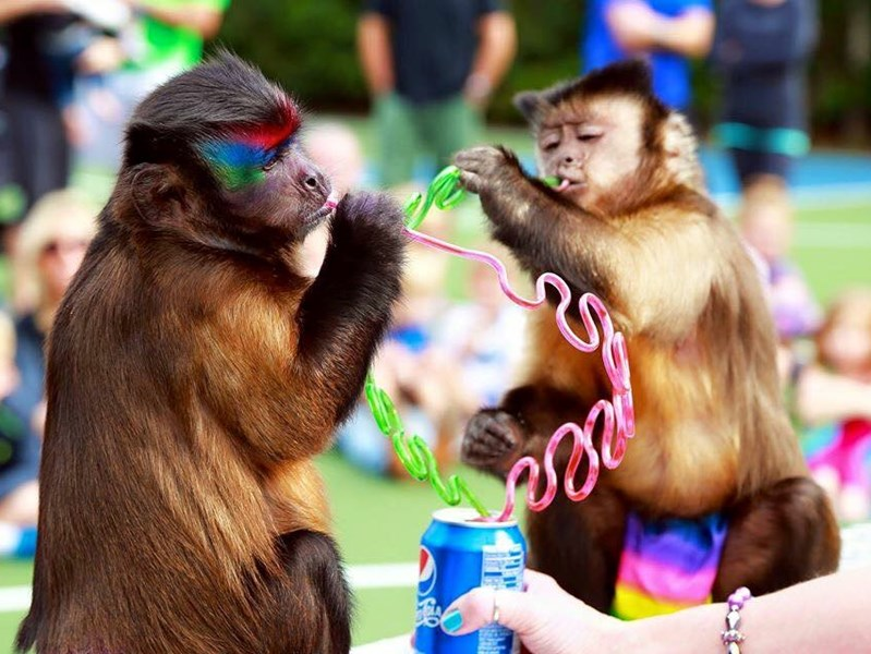 Twins and Jungle Friends - Animal For A Party - Sebring, FL