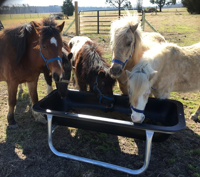 Pony Rides, Petting Animals, Moonwalks by JM Farms - Animal For A Party - Chesapeake, VA