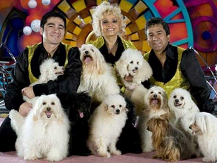 The Olate's Family Dogs - Circus Performer - Sorrento, FL