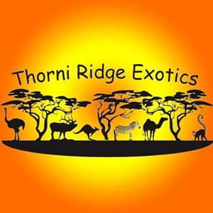 Smithton, MO Petting Zoo | Thorni Ridge Exotics LLC