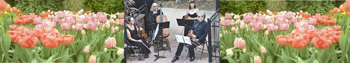 Ptarmigan Classical & Rock String Quartet!