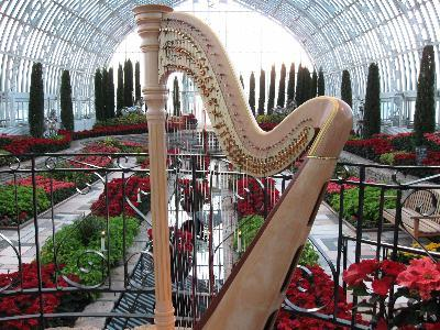 O'Meara Music - Solo, Duo, Or Trio | Eau Claire, WI | Harp | Photo #10