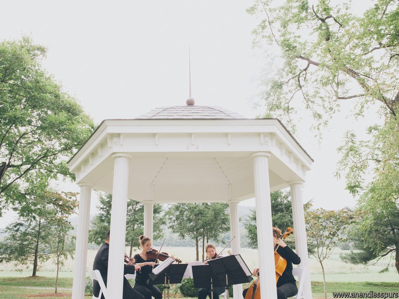 Cherry Blossom String Quartet - String Quartet - Arlington, VA