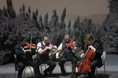 Sparrow Lane Strings | Beverly Hills, CA | Classical String Quartet | Photo #3
