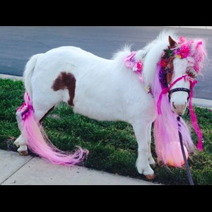 Santa Ana Animal For A Party | Cherry The Miniature Trick Horse & Nancy Degan