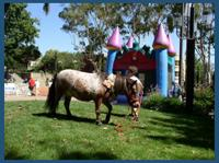 The Tiny Trotters- Pony Rides And Petting Zoo | Los Osos, CA | Animals For Parties | Photo #2