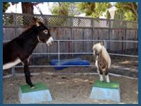 The Tiny Trotters- Pony Rides And Petting Zoo | Los Osos, CA | Animals For Parties | Photo #4