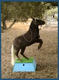 The Tiny Trotters- Pony Rides And Petting Zoo | Los Osos, CA | Animals For Parties | Photo #6