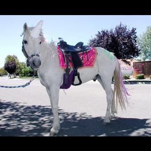 Tickle Me- Pony Parties And Traveling Petting Zoo - Animal For A Party - Brentwood, CA