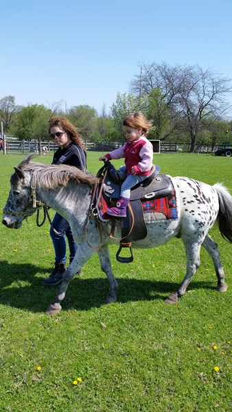 Patch 22 Ltd - Pony Rides - Wadsworth, IL