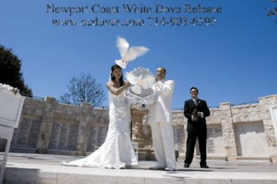 White Dove Release For Weddings & Events | Huntington Beach, CA | Dove Releases | Photo #1