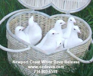 White Dove Release For Weddings & Events | Huntington Beach, CA | Dove Releases | Photo #10