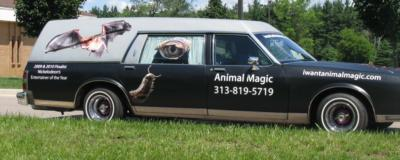 Animal Magic | Belleville, MI | Animals For Parties | Photo #10