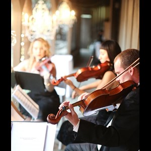 Orange Chamber Music Trio | Organic String Quartet