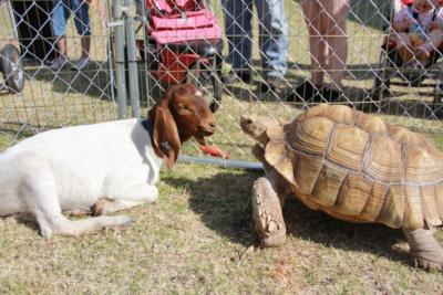 Extreme Animals | Tuttle, OK | Animals For Parties | Photo #11