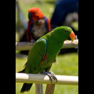 Joel's Exotic Parrot For Events And Parties - Animal For A Party - Oceanside, CA