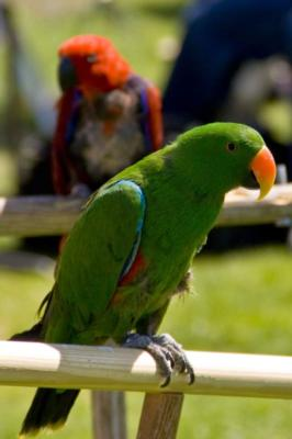Joel's Exotic Parrot For Events And Parties | Oceanside, CA | Animals For Parties | Photo #1