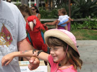 Joel's Exotic Parrot For Events And Parties | Oceanside, CA | Animals For Parties | Photo #6
