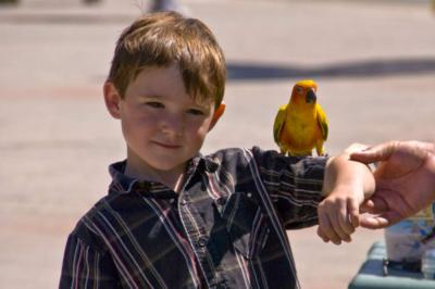 Joel's Exotic Parrot For Events And Parties | Oceanside, CA | Animals For Parties | Photo #2