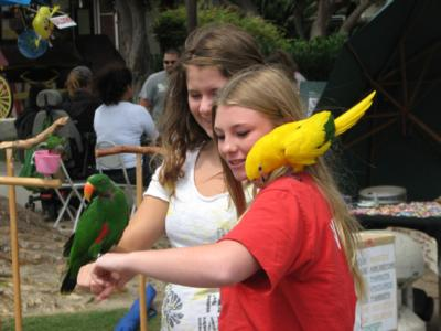 Joel's Exotic Parrot For Events And Parties | Oceanside, CA | Animals For Parties | Photo #17
