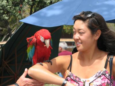 Joel's Exotic Parrot For Events And Parties | Oceanside, CA | Animals For Parties | Photo #14