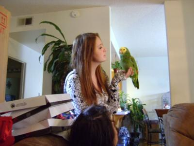 Joel's Exotic Parrot For Events And Parties | Oceanside, CA | Animals For Parties | Photo #23