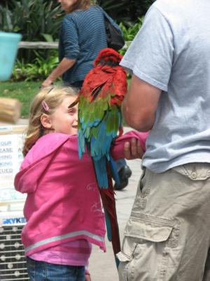 Joel's Exotic Parrot For Events And Parties | Oceanside, CA | Animals For Parties | Photo #9