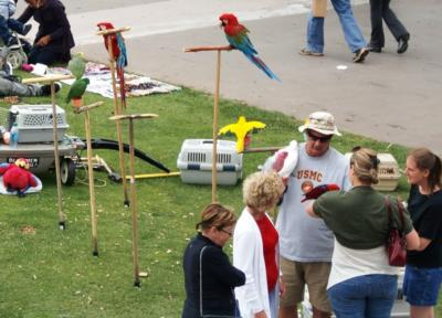 Joel's Exotic Parrot For Events And Parties | Oceanside, CA | Animals For Parties | Photo #24